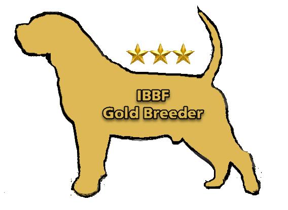IBBF Gold