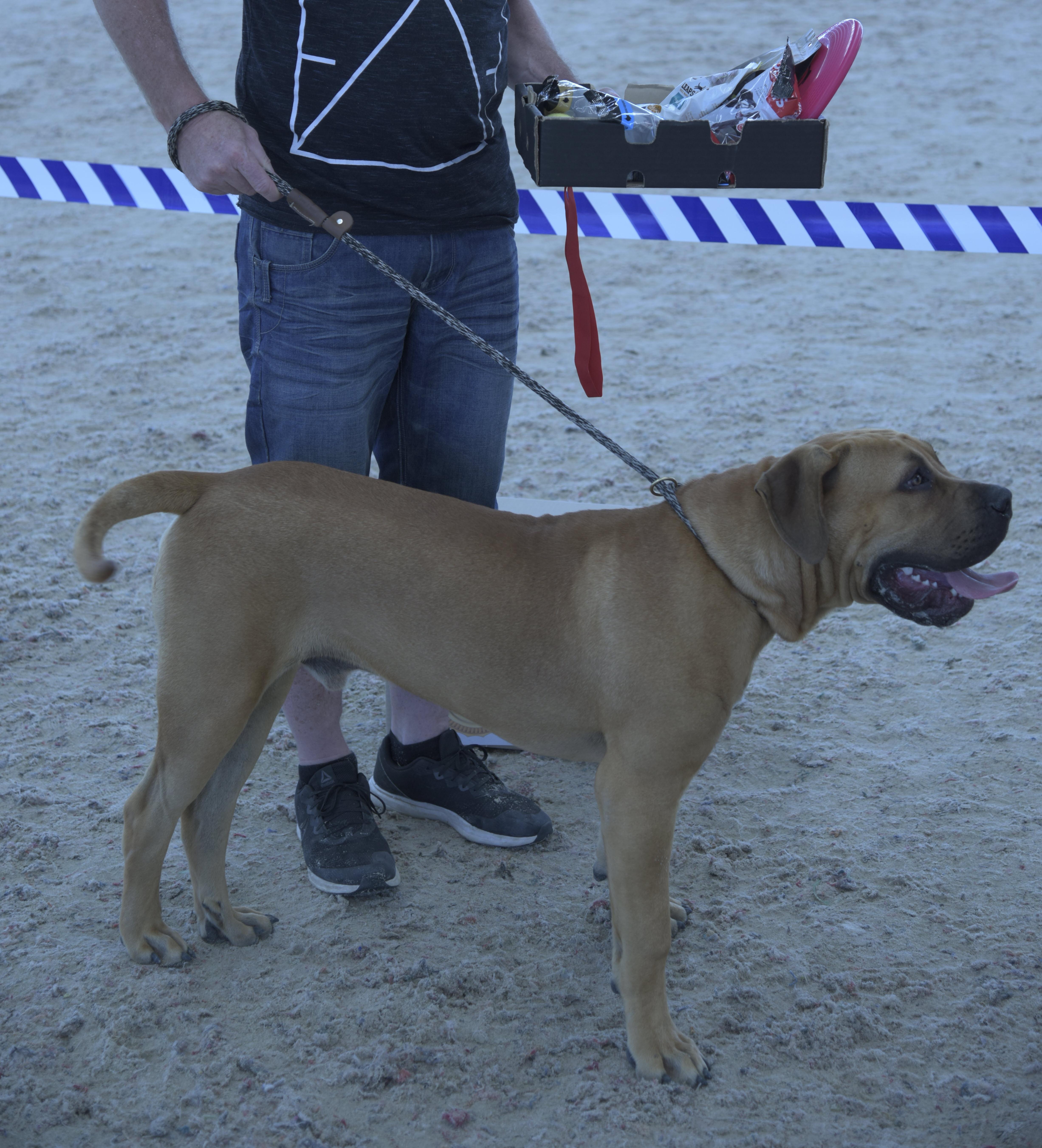 2nd Top Dog Ragnar